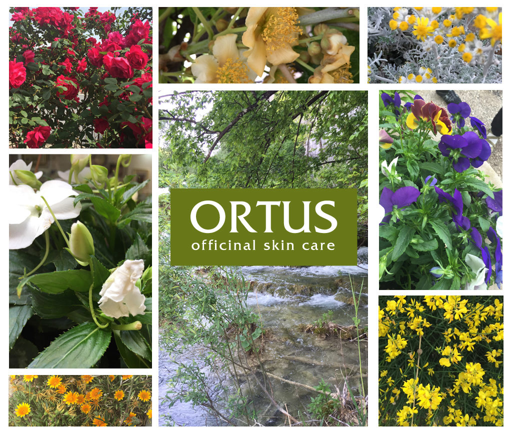 Introducing Ortus